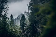 Nebellandschaft auf knapp 2000m Höhe